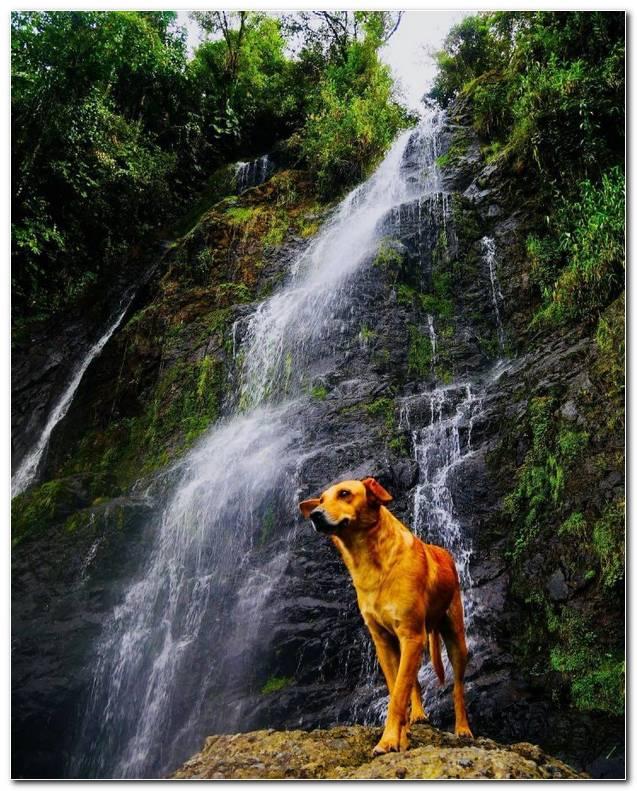 Cascada El Salto Del ?ngel Antioquia Colombia