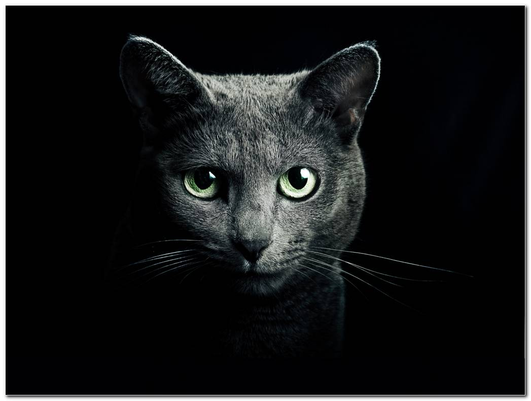 Cat Black Animal Wallpaper