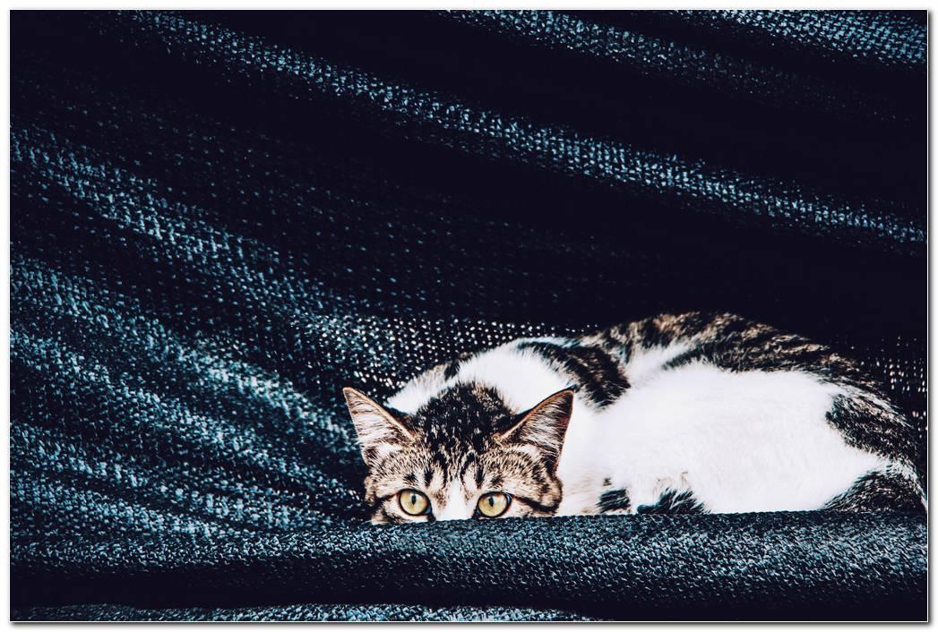Cat Resting Hd Wallpaper