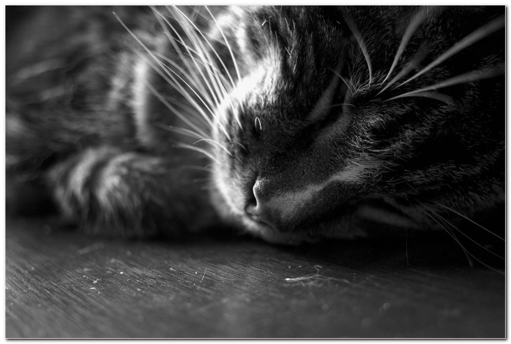 Cat Sleep Animal Wallpaper Image