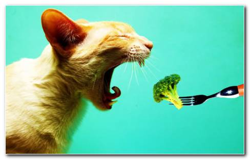 Cat Eating A Broccoli Hd Wallpaper