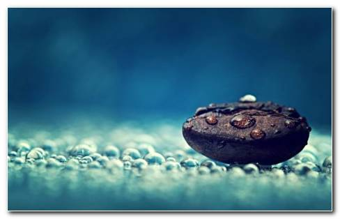 Coffee Bean With Water Drops HD Wallpaper