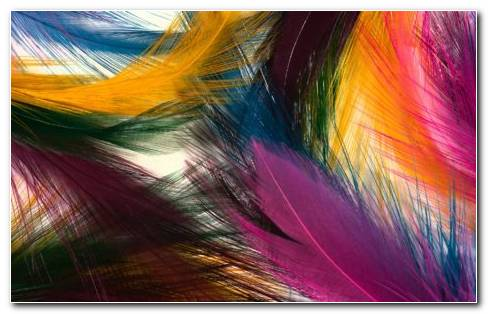 Colored Feather HD Wallpaper