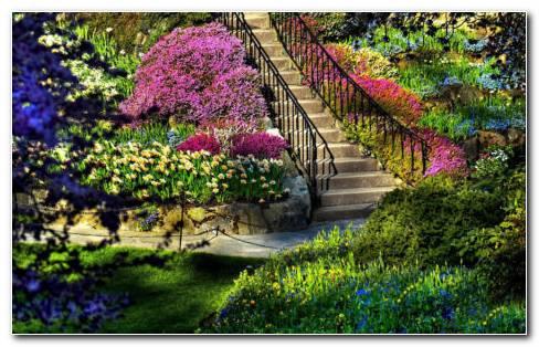 Colorful Garden HD Wallpaper