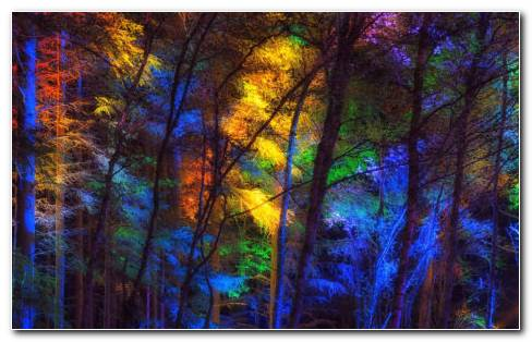 Colorful Trees Year Round HD Wallpaper