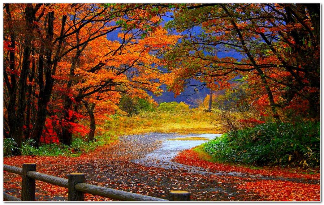Cool Autumn Season Nature Wallpaper Background