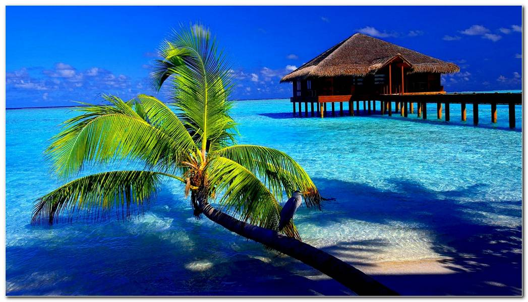 Cool Beach Tropical Nature Wallpaper Background Image