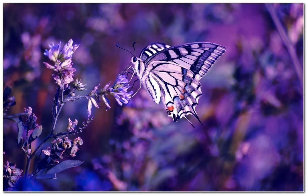 Cool Butterflies Purple Background Wallpaper