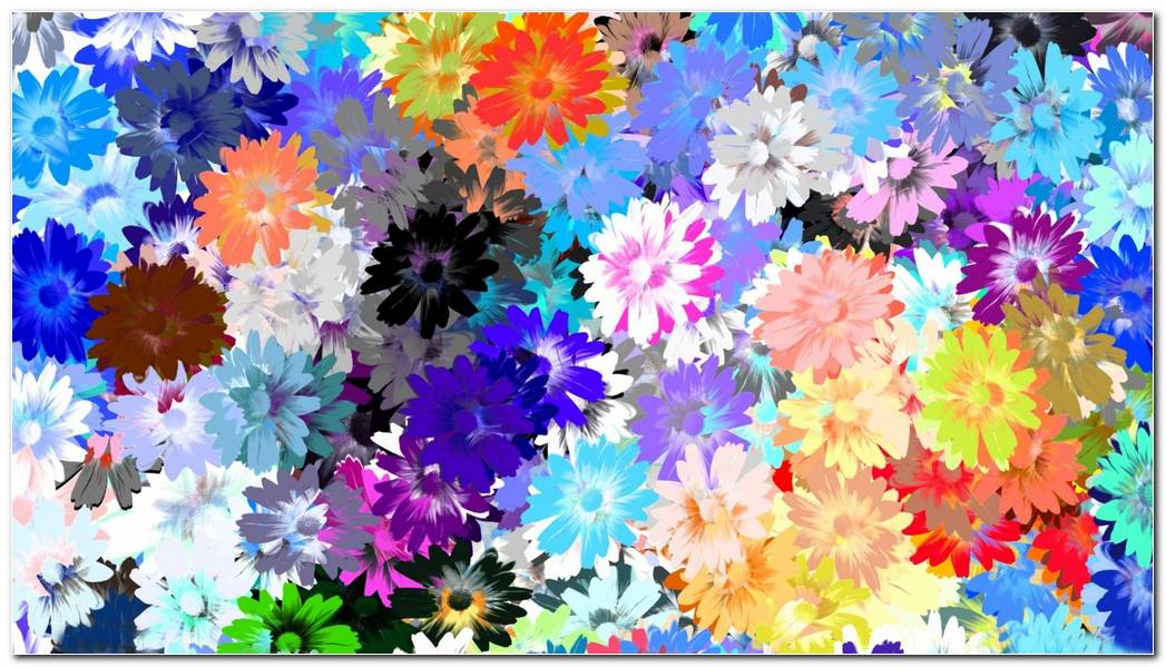Cool Flowers Colorful Background Wallpaper