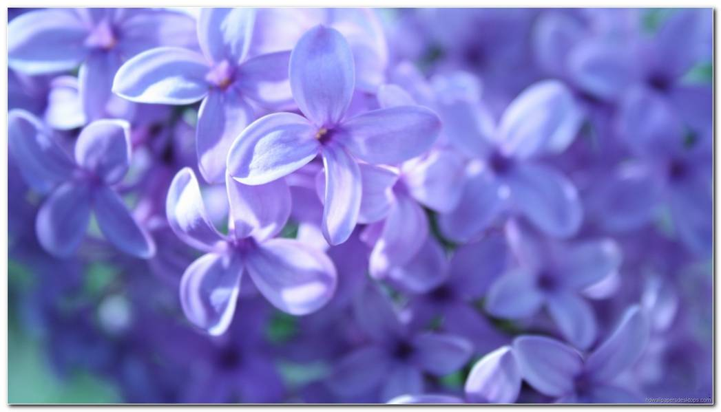 Cool Flowers Purple Background Wallpaper