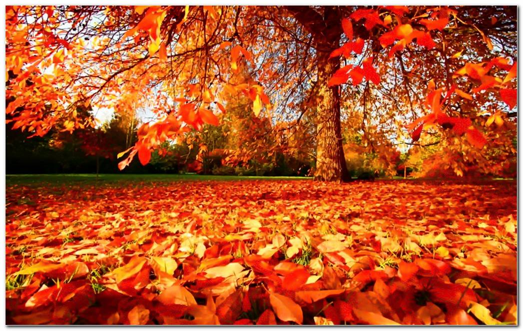 Cool Forest Autumn Season Nature Wallpaper Background