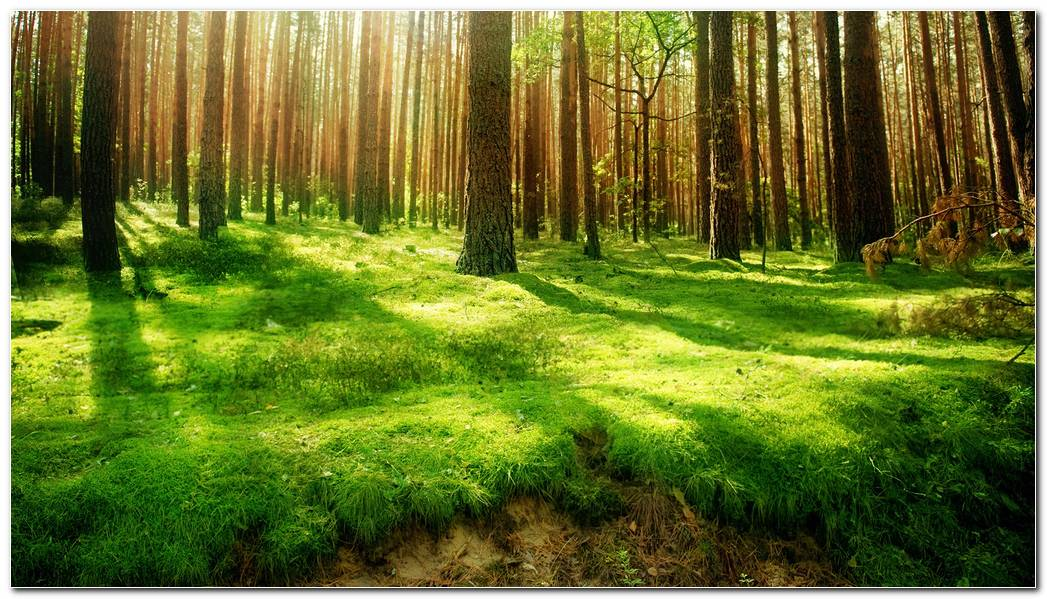 Cool Forest Desktop Backgrounds Wallpaper Image