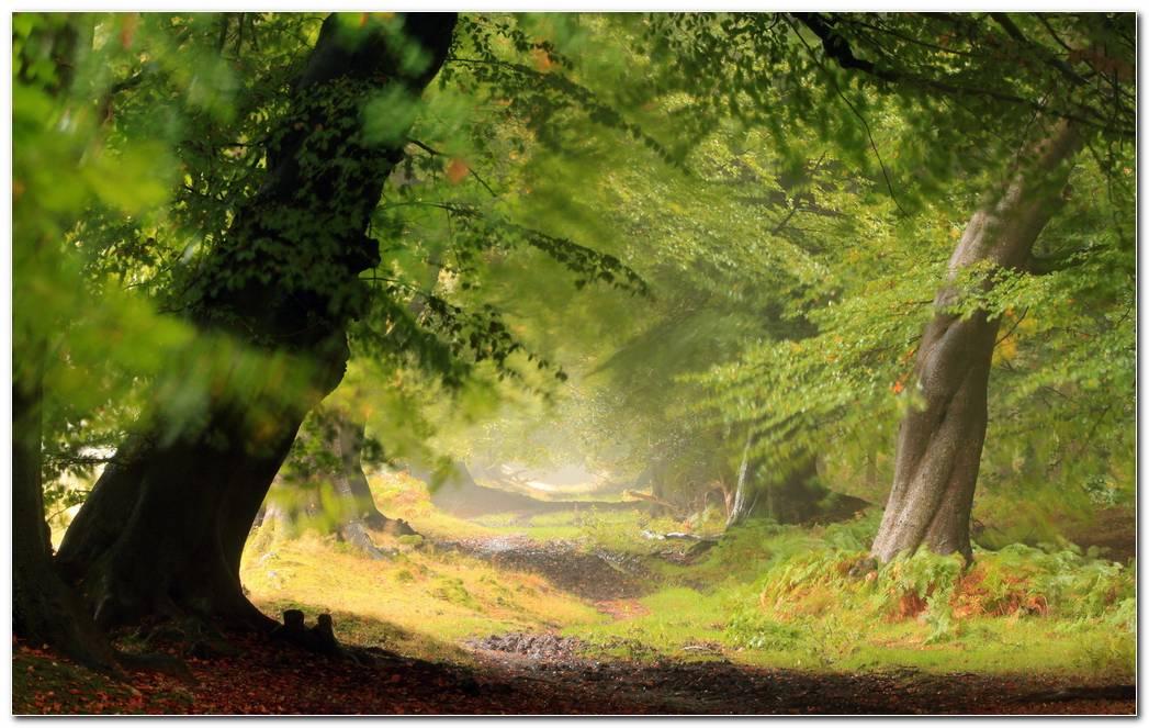 Cool Forest Desktop Backgrounds Wallpaper Picture