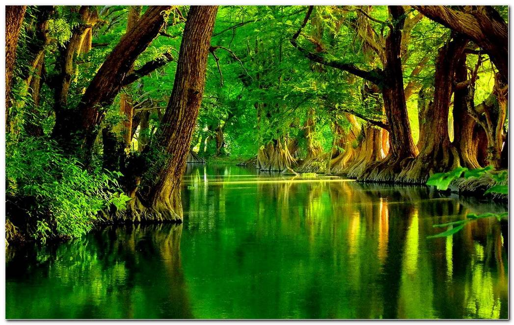 Cool Green Forest Nature Desktop Wallpaper Background