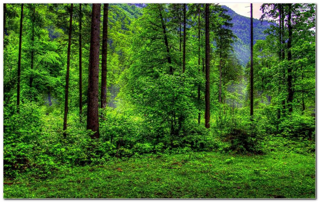 Cool Green Forest Nature Wallpaper Background