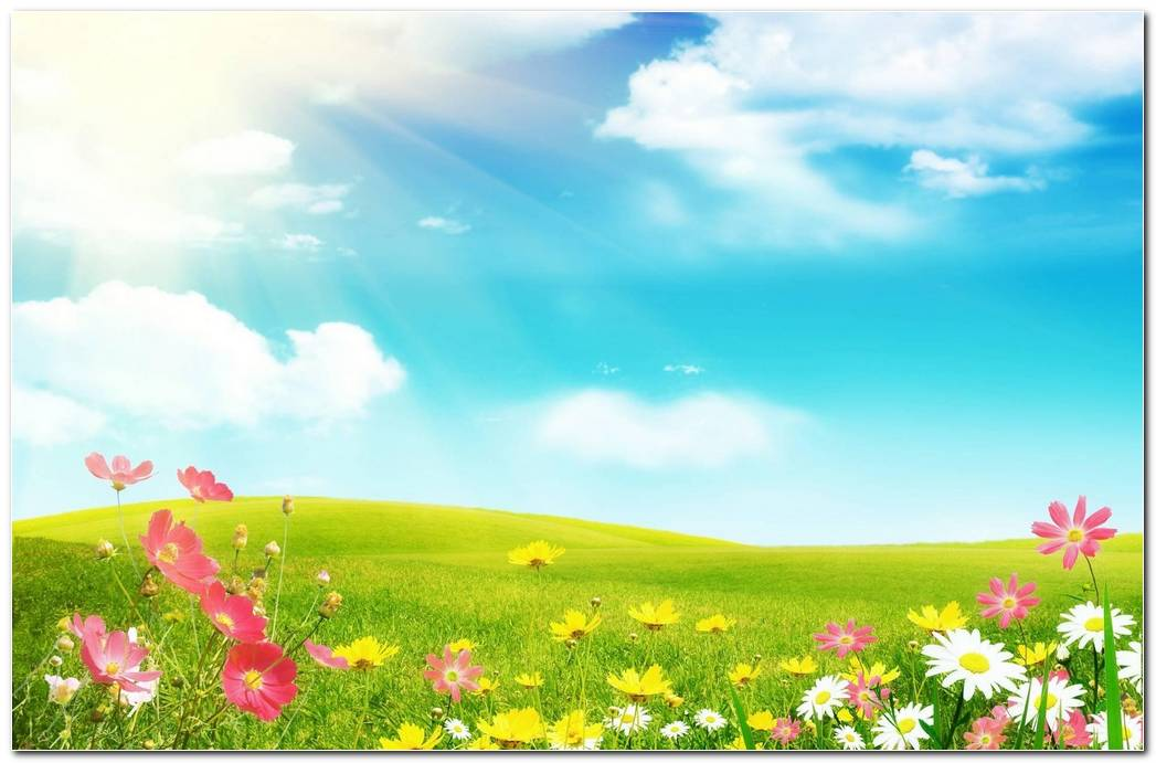 Cool Spring Wallpaper Background Desktop