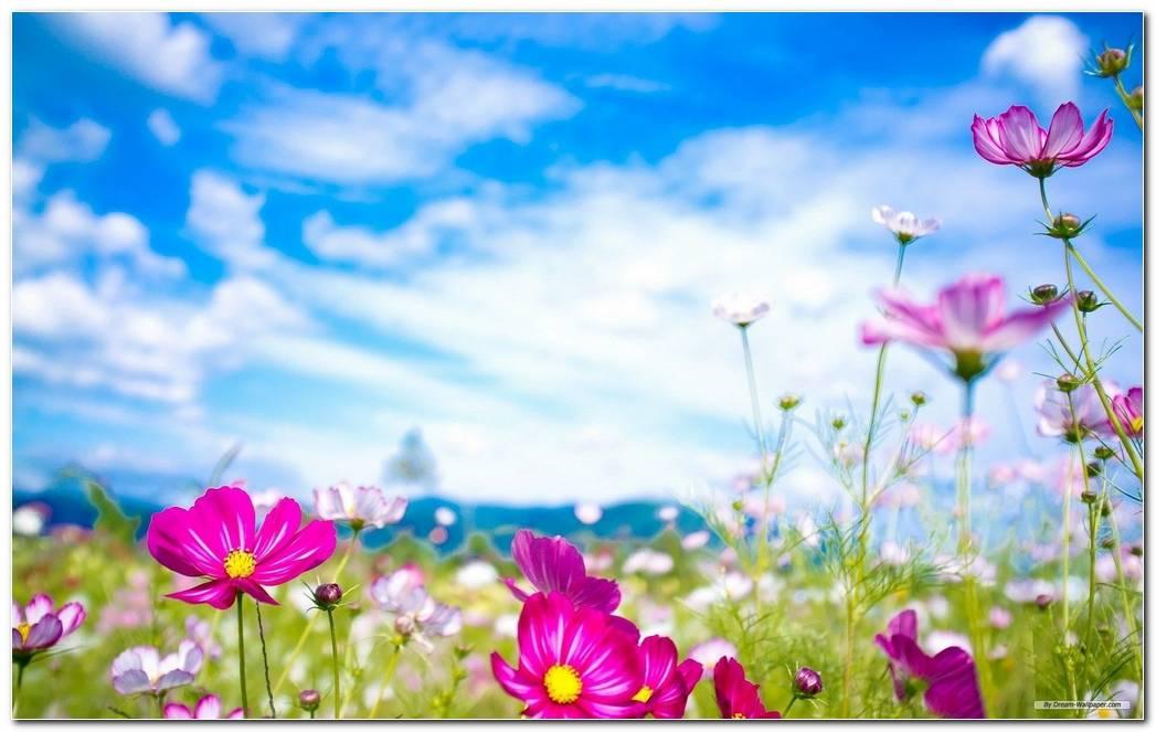 Cool Spring Wallpaper Background Image