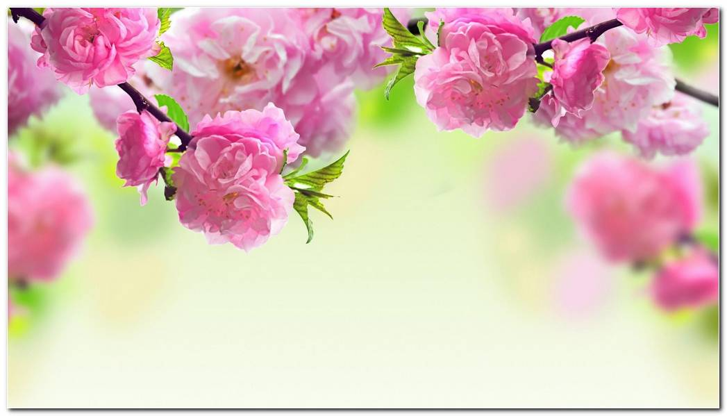 Cool Spring Wallpaper Background Nature Desktop