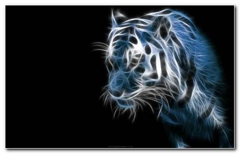 Cool Tiger Wallpaper