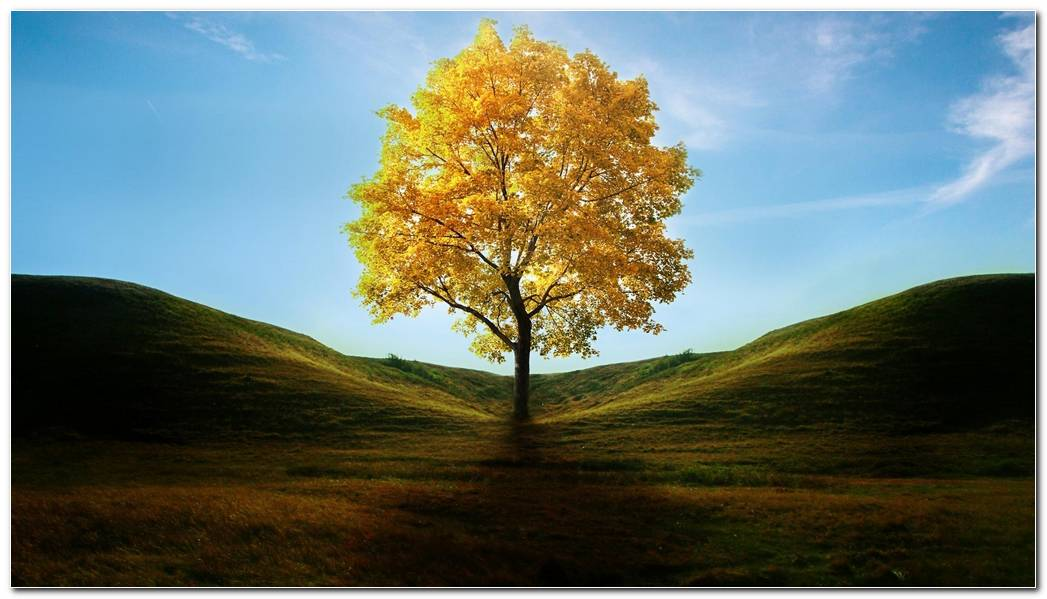 Cool Tree Wallpapers Background