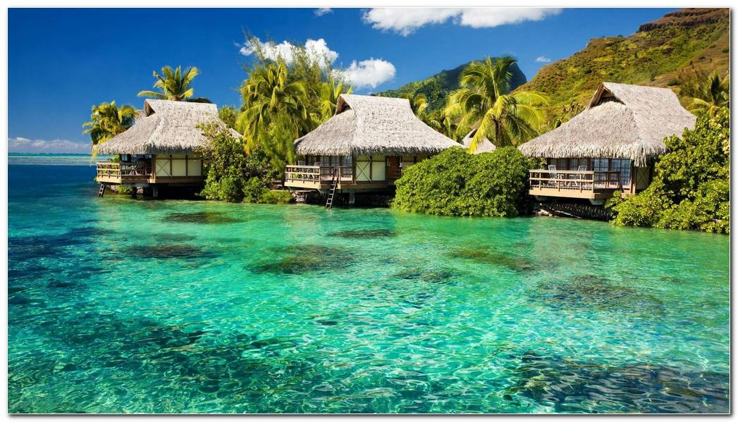 Cool Tropical Nature Wallpaper Background Picture