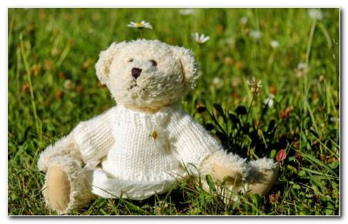 Cute Toys  White Teddy Sitting On Grass