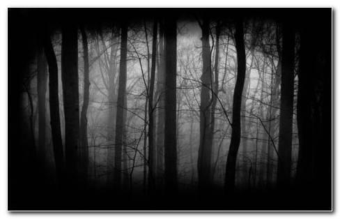 Dark Forest HD wallpaper