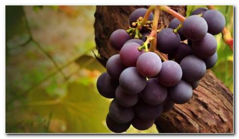 Dark Purple Grapes HD Wallpaper