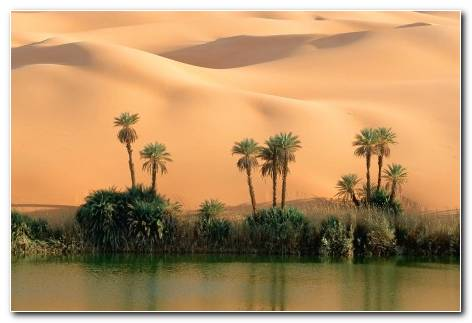 Desert Oasis Hd Wallpaper