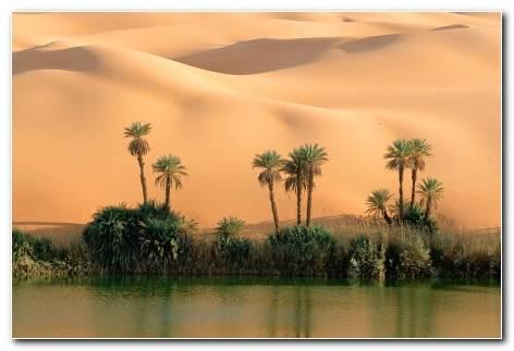 Desert Oasis Hd Wallpaper