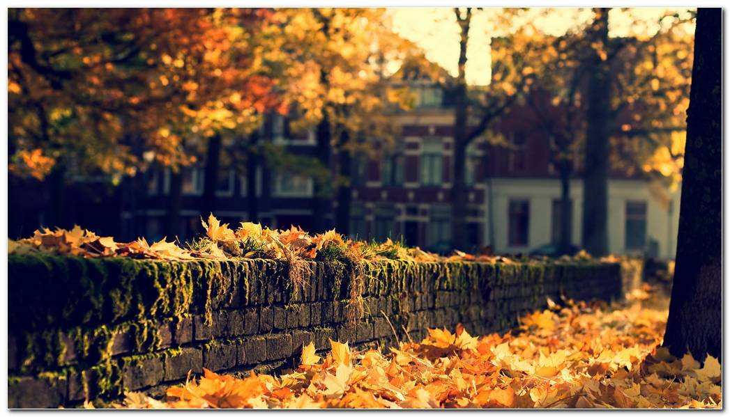 Desktop Autumn Season Nature Wallpaper Background