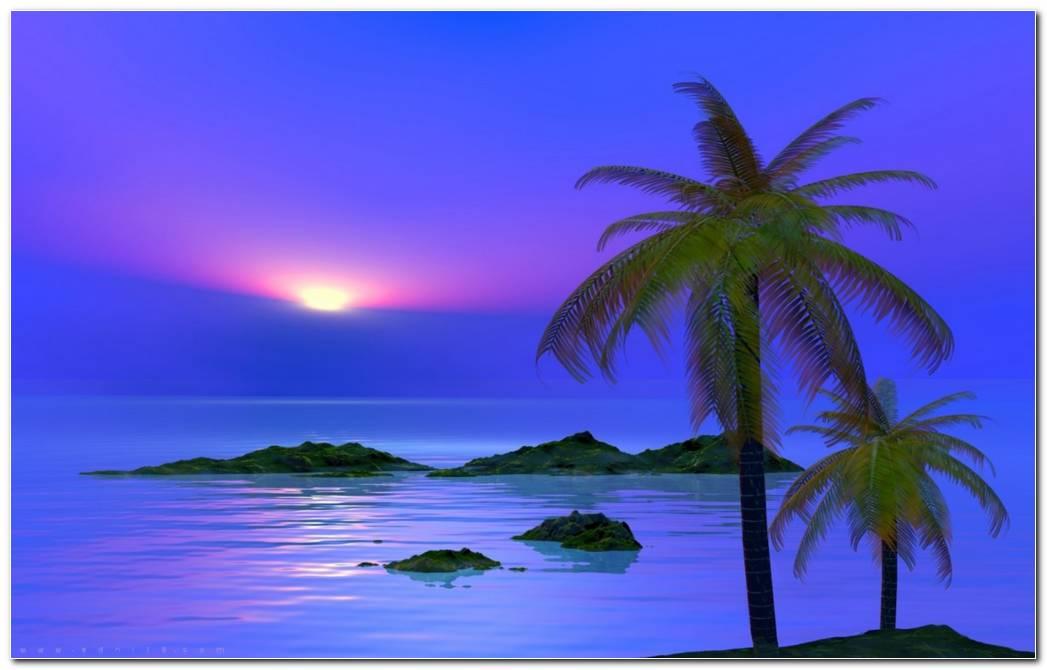 Desktop Palm Tree Sunset Wallpaper Palm Tree Wallpaper