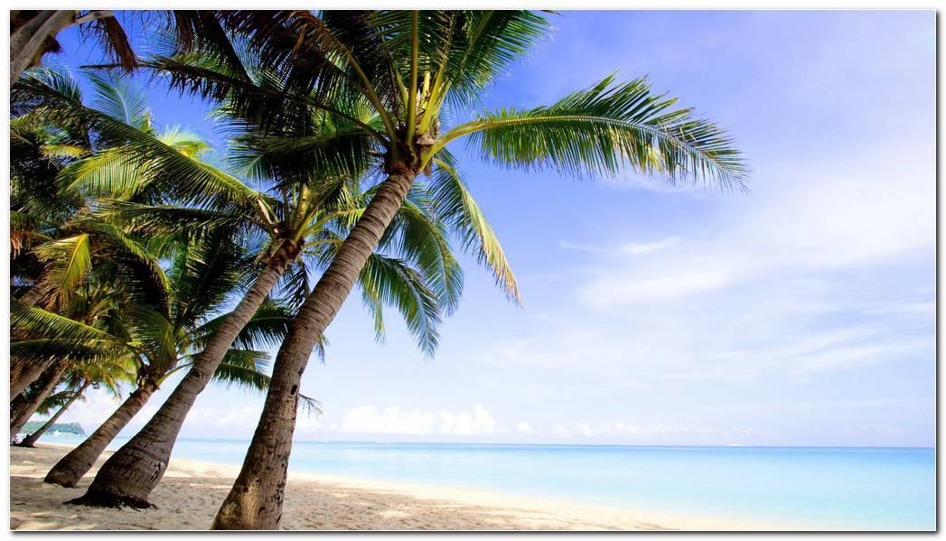 Desktop Palm Tree Wallpaper Background