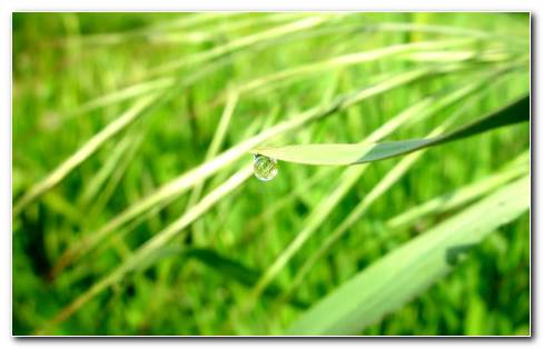 Dew Drop Grass HD Wallpaper