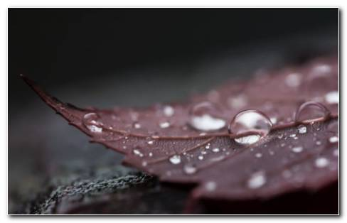Dew Drops On Leaf Surface HD Wallpaper