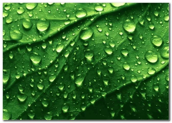 Dewdrop Background