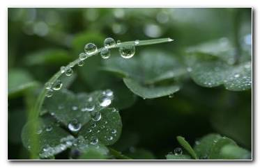 Dewdrop HD Wallpaper