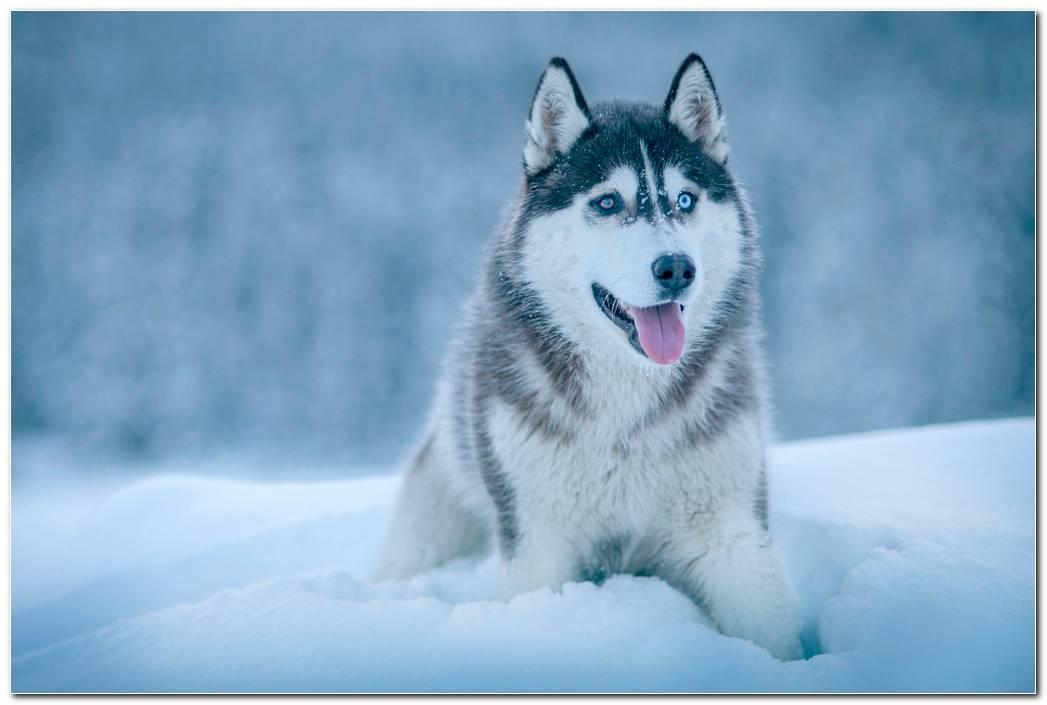 Dog Wallpaper Desktop Download