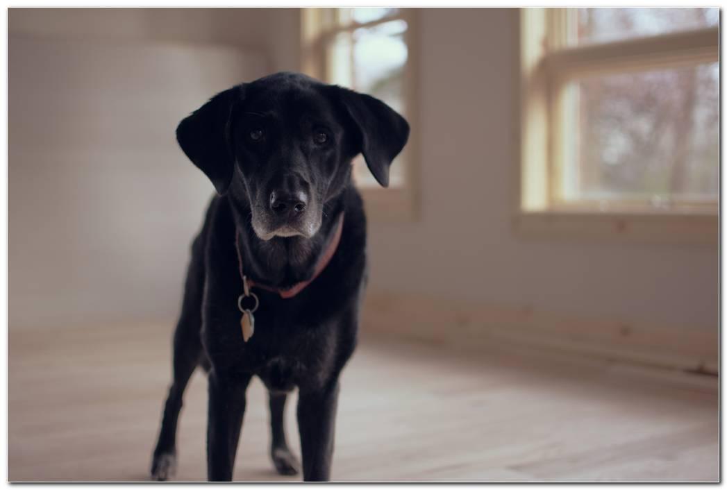 Dog Wallpaper Desktop