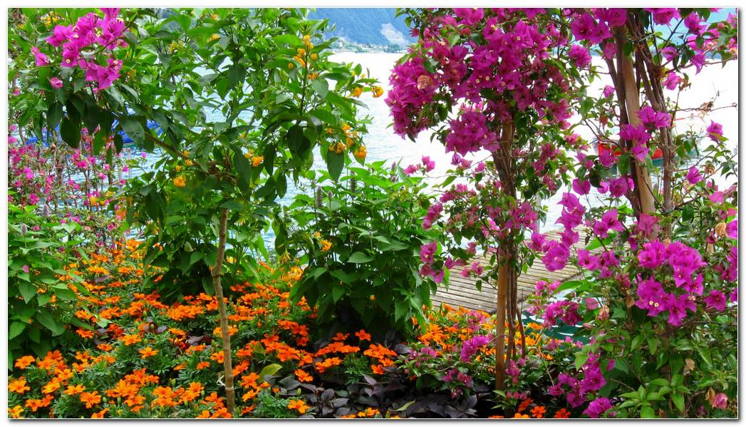 Download 1920x1080 Flowers Garden Sea Mountains Beauty Wallpaper 1920x1080