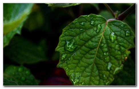 Drops Of Water On Leaf HD Wallpaper