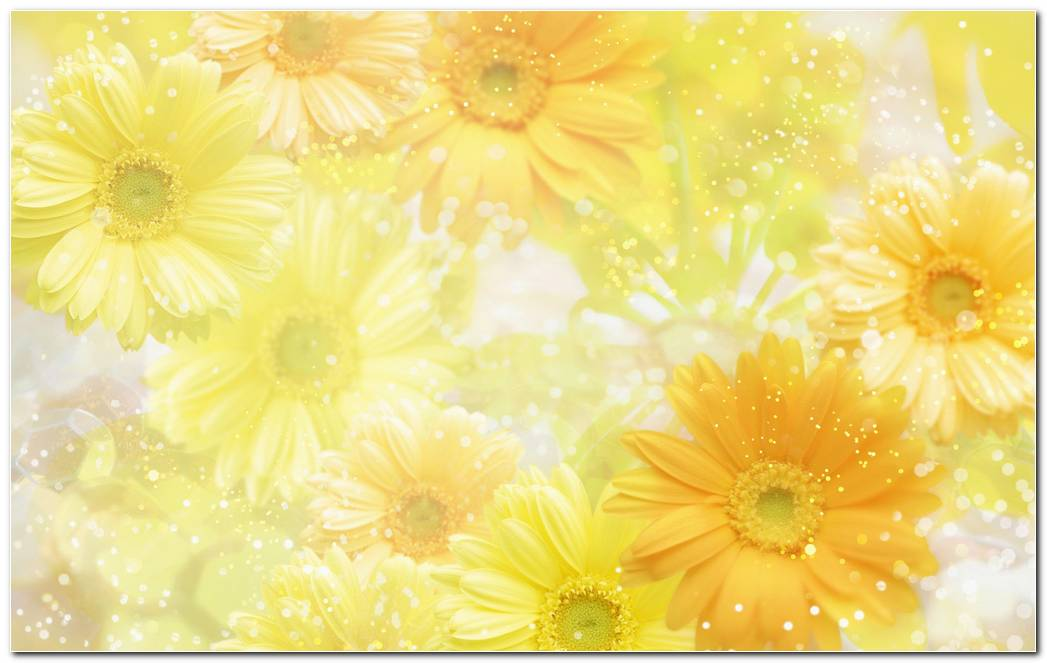 Elegant Flowers Yellow Background Wallpaper