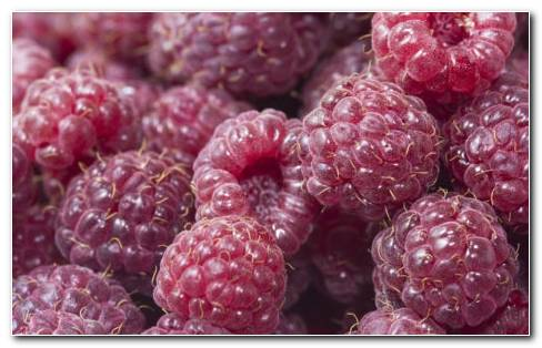 Everbearing Raspberries HD Wallpaper
