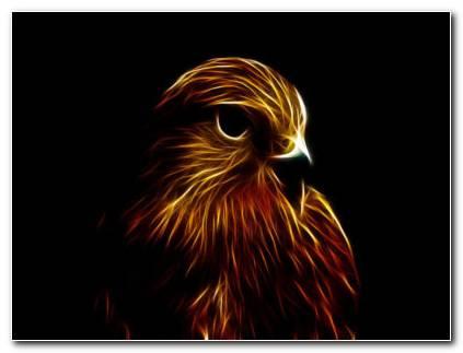 Falcon HD Wallpaper