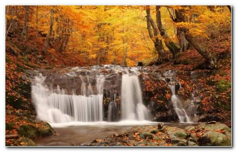 Fallen Leaves In The Small Forest Waterfall HD Wallpaper