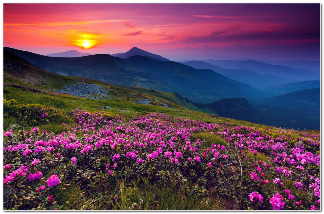 Fantastic Sunset Nature Wallpaper Background