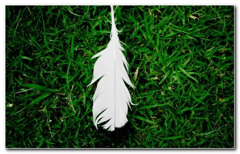 Feather Grass HD Wallpaper