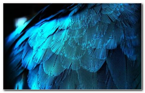Feather Texture HD Wallpaper