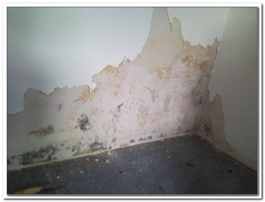 Feuchte Wand Mit Heizl?Fter Trocknen