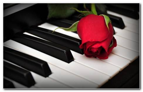 Flower On Piano HD Wallpaper